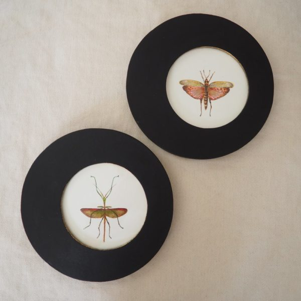 Duo insectes